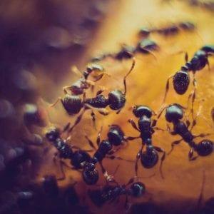 Jak poznáte hmyzí škůdce?